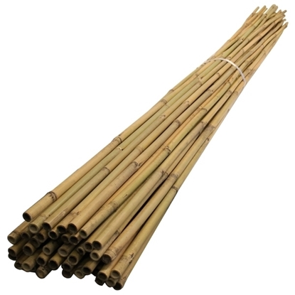 Picture of 3ft Bamboo Cane 6-8lbs